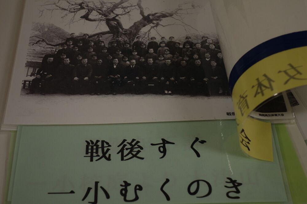 戦後すぐの写真。南関第1小学校のむくの木